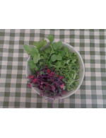 Microgreens – organic