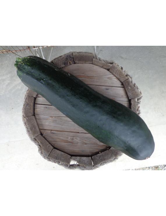 Jumbo zucchini of the day – organic
