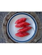 Habanero hot peppers – organic