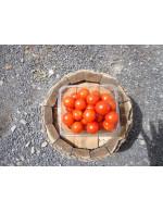 Cherry tomatoes - organic