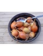 Small yellow oignons – organic