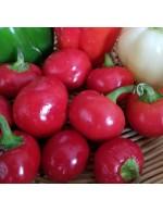 Cherry pepper – organic