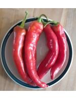Sweet Paprika pepper – organic