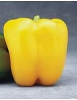 Sweet Yellow Bell Pepper – organic