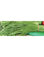 Garlic chives - organic