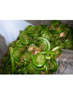 Frozen Fiddlehead