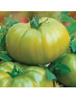 Tomato plant 'Green German