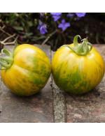 Tomato plant 'Green Zebra'