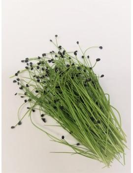 Garlic chives micro-greens, freshly cut