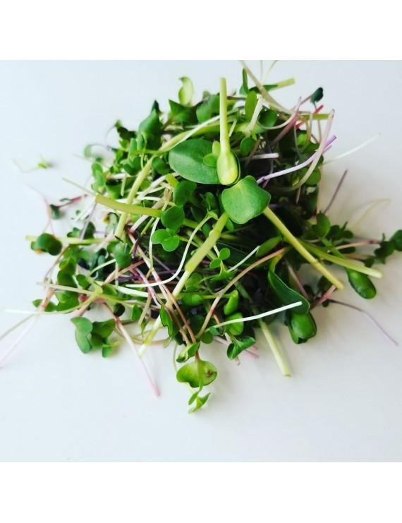 """""""Salad Mix"""" blend of shoots 150g"""