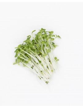Boccoli micro-greens freshly cut