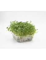 Brassica Blend Micro-Greens on soil