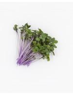 Purple Kohlrabi sprout, freshly cut