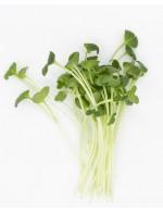 Daïkon radish shoots, freschly cut
