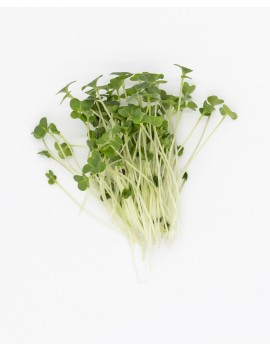 micro arugula, freshly cut