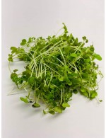 Mix water cress micro-green
