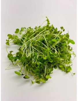 Mix water cress micro-green
