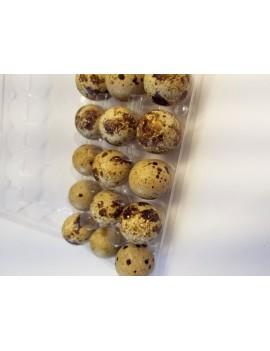 Quail eggs, fed with organic grains