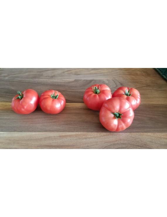Organic greenhouse tomatoes
