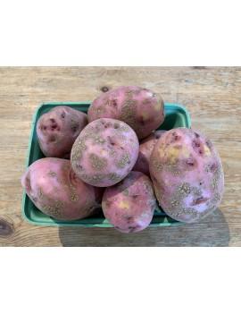 Organic Zina red potatoes